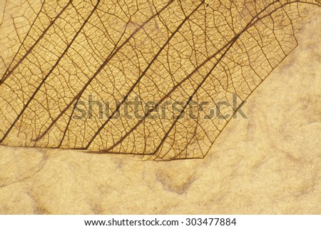 Veiny Leaf Pressed On Recycled Paper Horizontal Background - stock photo