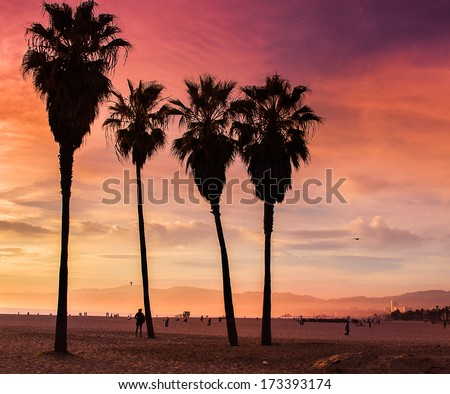 Venice Beach, California. Palm trees in an orange sunset light  - stock photo