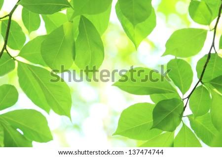 Verdure - stock photo