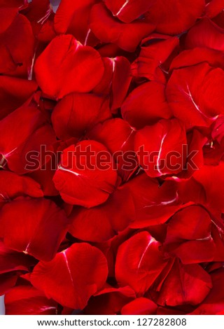 Vertical Background of Beautiful Red Rose Petals - stock photo