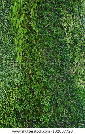 Vertical Garden Wall Stock Images Royalty Free Images