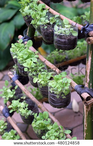 Vertical garden Organic vegetables