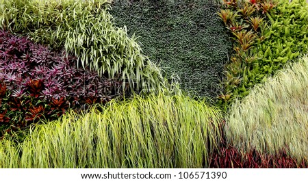 Vertical Garden with various tropical plants growing in a pattern - stock photo