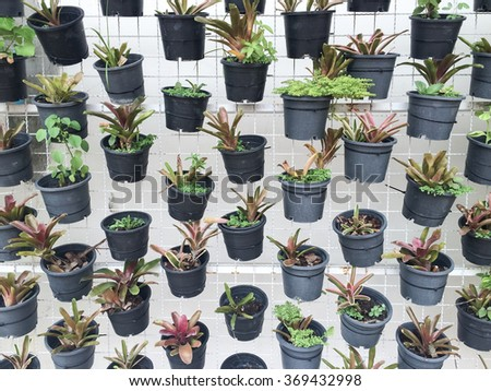 vertical green plant pattern in black pot - stock photo