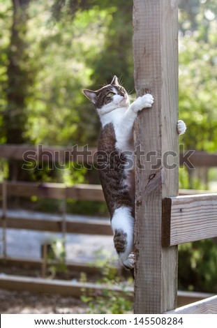 vertical orientation close up of a cat climbing a post outdoor on a sunny day with copy space / Hanging on for Dear Life - stock photo