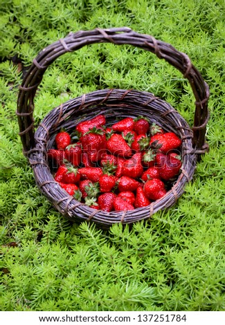 vertical orientation close up of a dark woven basket filled with fresh strawberries surrounded by green plants and copy space / Summer Dessert Choices