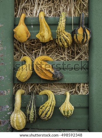 vertical orientation close up of fall gourds hanging on a vintage metal bin with hay in the background / Fall Decorating with Gourds
