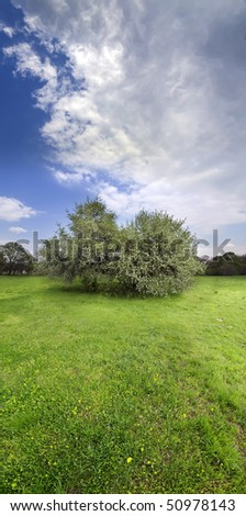 vertical panorama image of grass field and blooming tree at spring