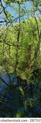 vertical panoramic picture of forest marsh - stock photo