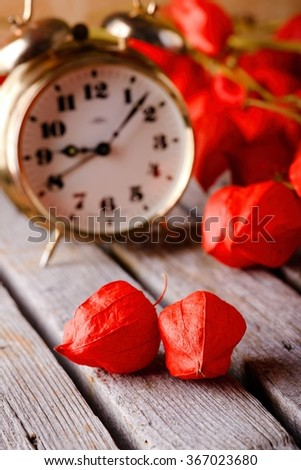 Vertical photo with two alone red physalis blooms which are placed on old grey wooden table in front of other branches from the same flower and brass alarm clock.  - stock photo