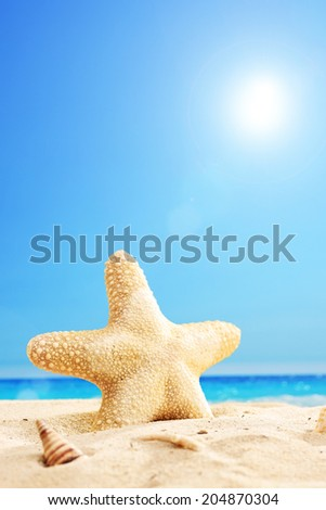 Vertical shot of a starfish on a sunny beach  - stock photo