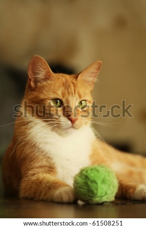 vertical shot of cute red cat - stock photo