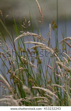 Vertical shot of natural grass providing a wild nature like background