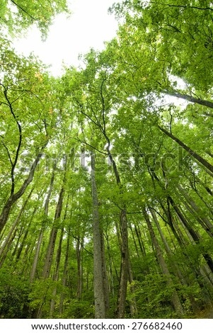 Vertical Shot Of Young Trees Standing Tall In Forest/ Forest - stock photo