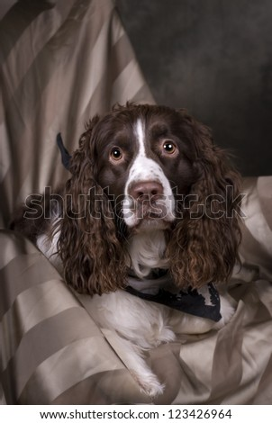Vertical studio shot of a beautiful Springer Spaniel in greens, browns and gray tones.
