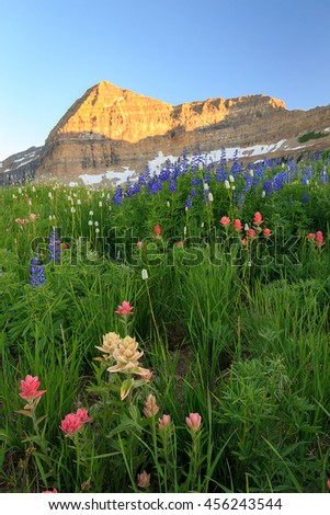 Vertical sunset wildflower image in the Wasatch Mountains, Utah, USA. - stock photo