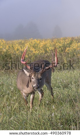 Vertical view of large whitetail buck