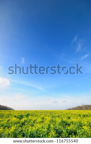 Vertical Wide angle blue sky over flower meadow Yasnaya Polyana Lev Nikolayevich Tolstoy's home town, tula, russia. - stock photo