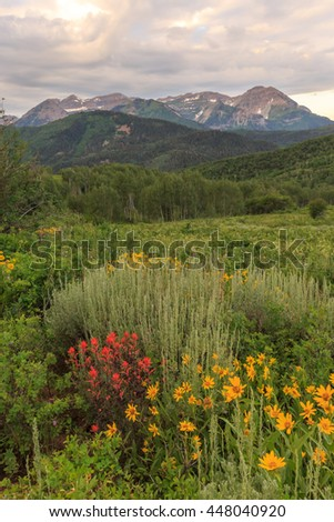 Vertical wildflower image in the Wasatch Mountains, Utah, USA. - stock photo