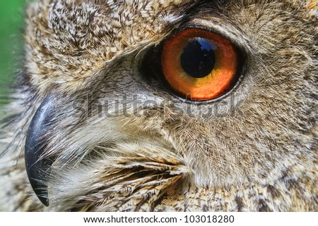 very close up face owl eagle