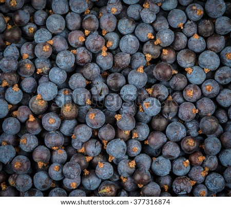 very closeup shot of juniper berries - stock photo