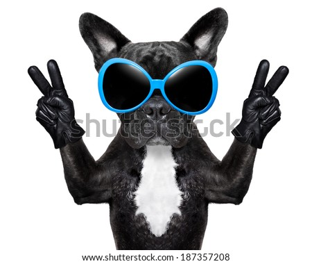 very cool dog with peace fingers wearing gloves and fancy sunglasses - stock photo