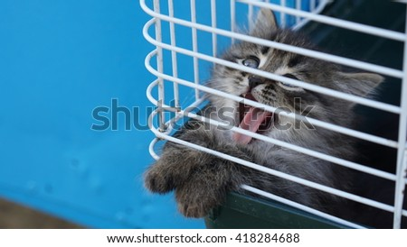 Very cute kitten in a cage yawns  - stock photo
