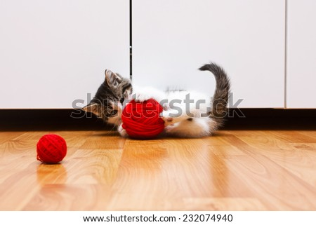 Very cute kitten playing with a red ball of yarn - stock photo