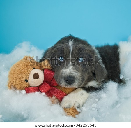 Very cute Newfoundland puppy laying in the snow with his teddy bear, with copy space.