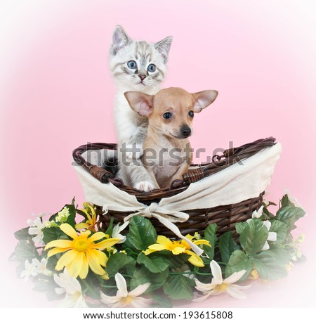 Very cute puppy and kitten sitting in a basket together on a pink background. - stock photo