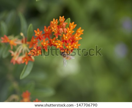 Very Detailed Bee Pollinating a Flower - stock photo