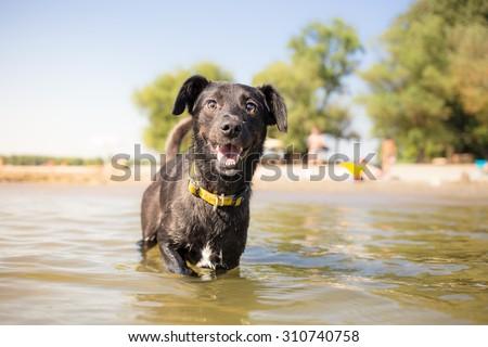 Very Happy dog on summer vacation - stock photo