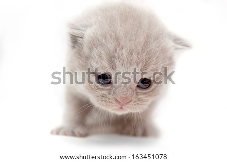 very little kitten looking down, peach color with big eyes