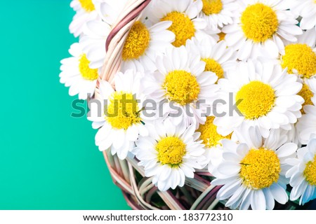Very many Chamomiles flowers in a basket - stock photo