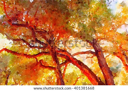 Very Nice watercolor of the trees in Carmel Valley,California