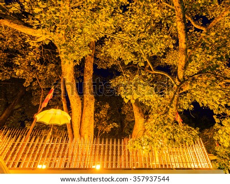 Very old holy Bo tree in Anuradhapura - stock photo