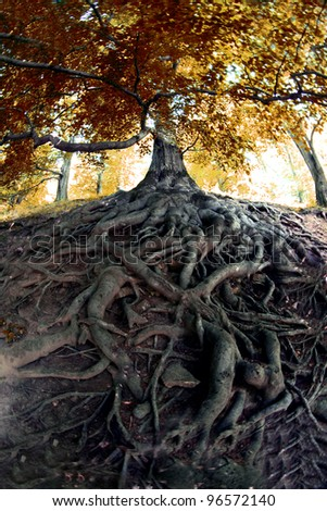 very old tree from the czech forest - stock photo