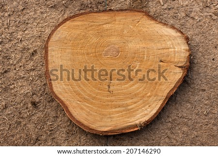 Very Old Wood Background  Cross section of tree trunk   - stock photo