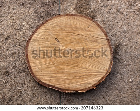 Very Old Wood Background  Cross section of tree trunk