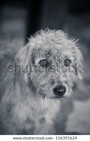 Very poor strays dog in Thailand  - stock photo