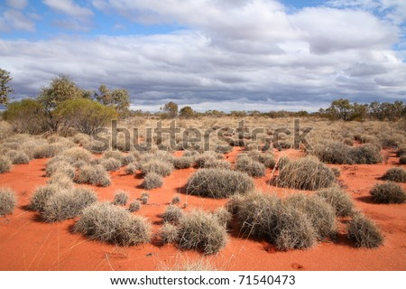 Very remote spinifex grass covered spot in the Great Victoria Desert in central Australia.