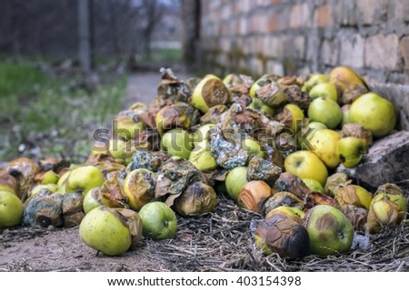 Very rotten green, yellow and red apples - stock photo