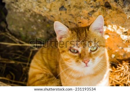 very sad cat with big green eyes - stock photo