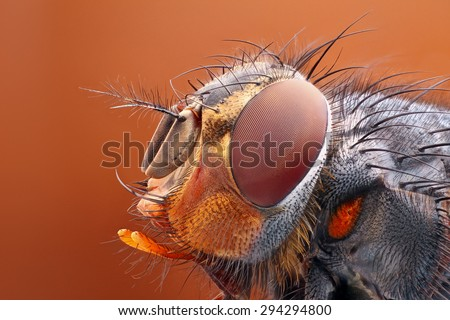 Very sharp and detailed study of Fly head stacked from many images into one very sharp photo.  - stock photo