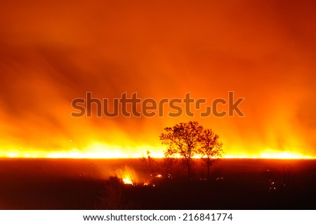 Very strong fire in the meadow - stock photo