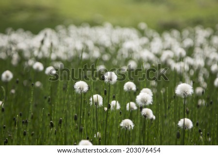 Very sunny meadow in the high mountains - stock photo