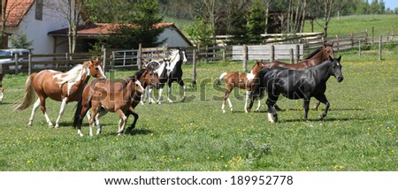 Very various batch of horses running on pasturage in spring - stock photo