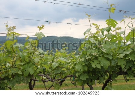 Very Vine Mountain