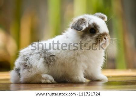 Very young rabbit on wood floor in the garden - stock photo