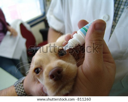 Vet applying eye drops in puppy - stock photo